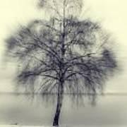 Winter Tree Print by Joana Kruse