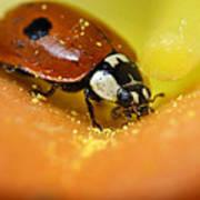 Beetle Print by Igor Sinitsyn