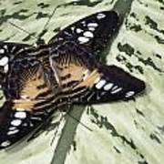 Butterfly Print by Nick Mares