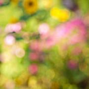 Flower Garden In Sunshine Print by Elena Elisseeva