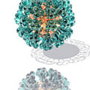 Virus, Computer Artwork Print by Laguna Design