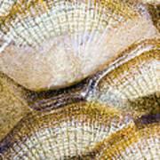 Fish Scales Background Print by Odon Czintos