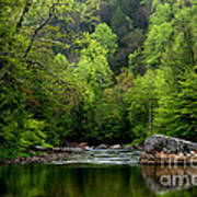 Williams River Scenic Backway Print by Thomas R Fletcher