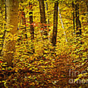 Fall Forest Print by Elena Elisseeva