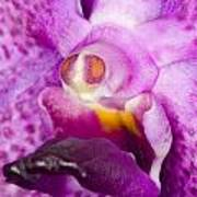 Orchid Flower Bloom Print by C Ribet