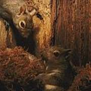 A A Baby Eastern Gray Squirrel Sciurus Print by Chris Johns