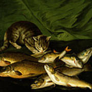 A Cat With Trout Perch And Carp On A Ledge Print by Stephen Elmer