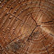 A Close Up Of Tree Rings Print by Sabine Davis