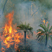 A Controlled Fire Helps Prevent Print by Randy Olson