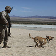 A Dog Handler Conducts Improvised Print by Stocktrek Images
