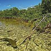 A Lemon Shark Pup Swims Among Mangrove Print by Brian J. Skerry