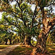 A Southern Stroll Print by Steve Harrington