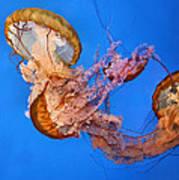 A Trio Of Jellyfish Print by Kristin Elmquist