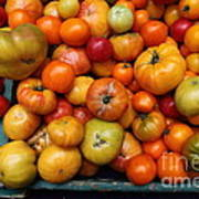 A Variety Of Fresh Tomatoes - 5d17812 Print by Wingsdomain Art and Photography