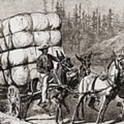 African American Teamster Transporting Print by Everett