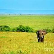 African Elephant In The Wild Print by Anna Om