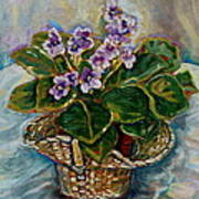 African Violets Print by Carole Spandau