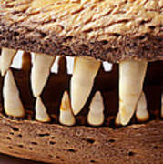 Alligator Skull Teeth Print by Garry Gay