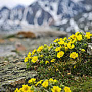 Alpine Meadow  Print by Elena Elisseeva