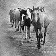 American Quarter Horse Herd In Black And White Print by Betty LaRue