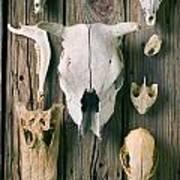 Animal Skulls Print by Garry Gay