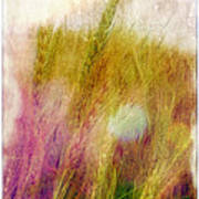 Another Field Of Dreams Print by Judi Bagwell