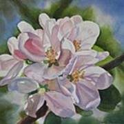 Apple Blossoms Print by Sharon Freeman