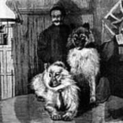 Arctic Explorer And Dogs, 19th Century Print by