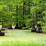 Arkansas Lake With Cypresses Print by Carol Groenen