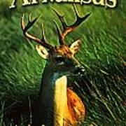 Arkansas White Tailed Deer Print by Flo Karp