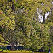 Audubon Park 2 Print by Steve Harrington