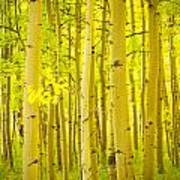 Autumn Aspens Vertical Image  Print by James BO  Insogna