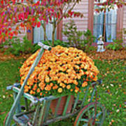 Autumn Display I Print by Steven Ainsworth