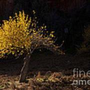 Autumn Light Print by Mike  Dawson