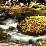 Autumn Stream Print by Lena Auxier
