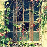 Autumn Vines Across A Window Print by Georgia Fowler