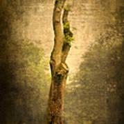 Bare Tree Print by Svetlana Sewell