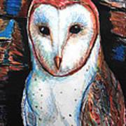 Barn Owl  Print by Jon Baldwin  Art