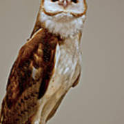 Barn Owl Of Michigan Print by LeeAnn McLaneGoetz McLaneGoetzStudioLLCcom