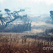 Big Meadows In Winter Print by Thomas R Fletcher
