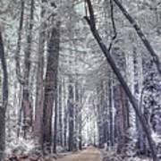 Big Sur State Park Print by Jane Linders
