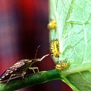 Biocontrol Of Bean Beetle Print by Science Source
