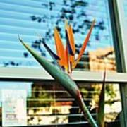 Bird Of Paradise-2 Print by Todd Sherlock