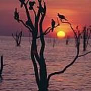 Birds On Tree, Lake Kariba At Sunset Print by Axiom Photographic