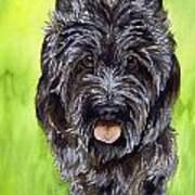 Black Scottish Terrier Print by Cherilynn Wood