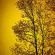 Blazing Sunset Print by Cheryl Davis