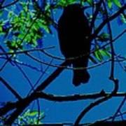 Blue-black-bird Print by Todd Sherlock
