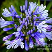 Blue On Blue Print by Karen Wiles