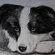 Borden Collie Pup Print by Joan Pye