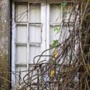 Branchy Window Print by Carlos Caetano
